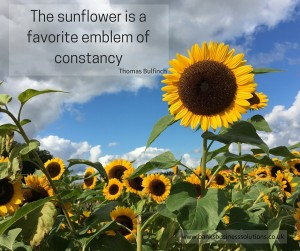 The sunflower is a favorite emblem of constancy